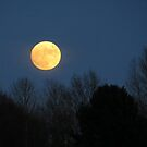 The Rising Full Moon by ienemien