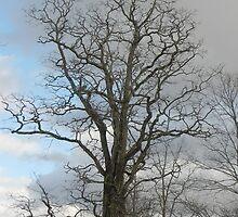 Towering Oak by Martha Medford