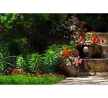 Pots of plants Photographic Print