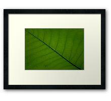Mauntain magnolia leave Framed Print