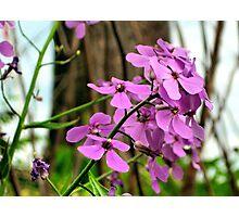Pretty In Purple  Photographic Print
