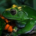 White's Tree Frog by Tracy Deptuck