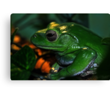 White's Tree Frog Canvas Print