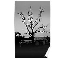Naked Tree B/W Poster
