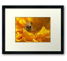Petal Hopper Framed Print