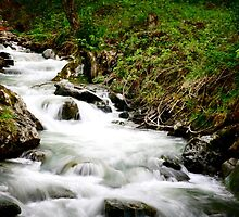 Running stream in the alps.  by focusonphotos