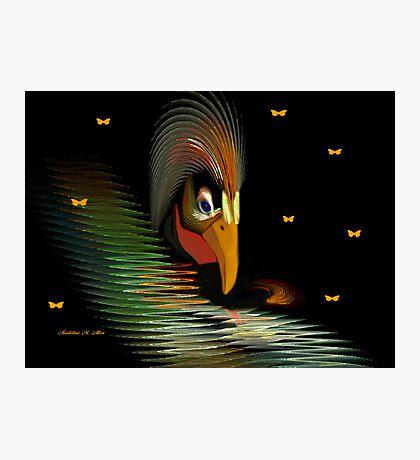 CHICKEN-HAWK Photographic Print
