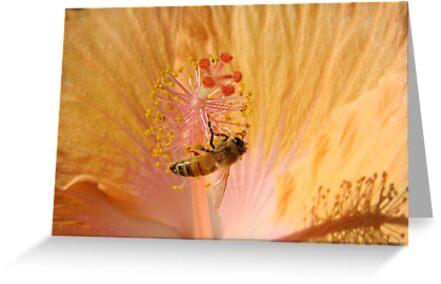 Orange Bee Stamen Hibicus Shadow by Martice