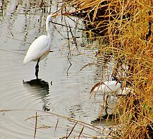 Egrets in the Evening by Martha Sherman
