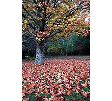 Lovely Leaves Photographic Print
