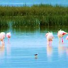 Dancing Flamingos  by westwizzer