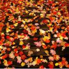 Blazen Leaves by Shelley Neff