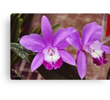 Lilac Wednesday Canvas Print