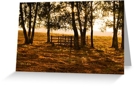 Autumn Afternoon by Mark Ramsell