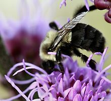 I'm busy! Buzz off! by Keala