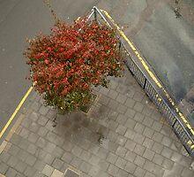 Four Seasons - Autumn by Stephan Gregoire