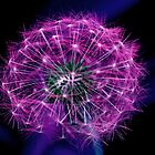 PURPLE DANDELION SEEDS by DRON