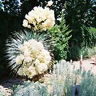 Yucca in Bloom by MeghanFish