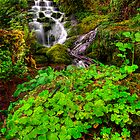 Shamrocks at Badger Falls, Shropshire, England by dotcomjohnny