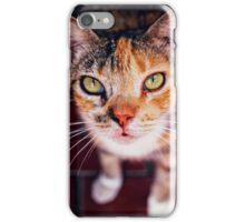 Street Cat iPhone Case/Skin