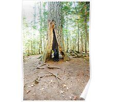 Copper Harbor, Michigan Estivant Pines Nature Sanctuary Poster