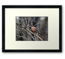 Stand Tall and Be Proud! Framed Print
