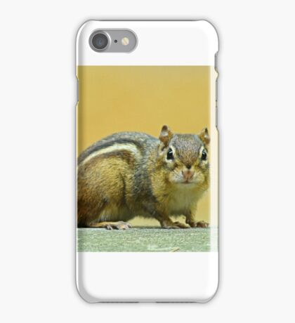 Indian Palm Squirrel iPhone Case/Skin