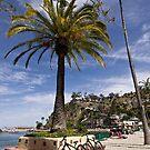 Catalina palm tree, bikes & beach by Celeste Mookherjee