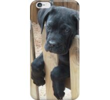 Black Labrador iPhone Case/Skin