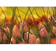 Emerging Spring. Photographic Print