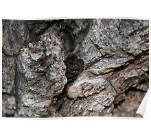 Nestled Woods Poster
