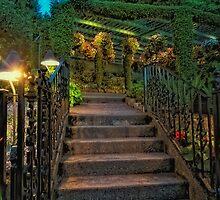 Butchart Gardens at Night 1 by Deri Dority