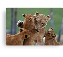 Playful Lions Canvas Print