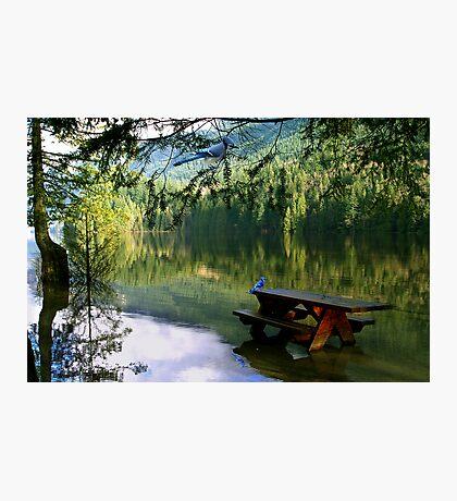 Blue Jays & Picnic Table Photographic Print