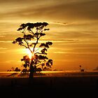 Sunrise gumtree by SDJ1
