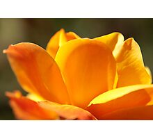 bright orange strike it rich rose Photographic Print