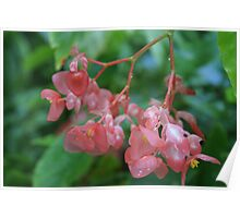 Waxy Pink Poster
