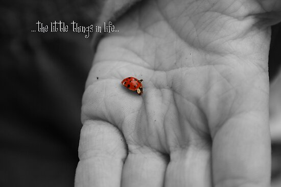 The Little Things In Life... by Sue Ellen Thompson