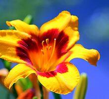 Vivid Lily by Deborah Crew-Johnson