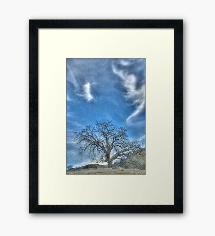 oak tree, landscape photography Framed Print
