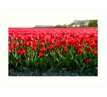 May I offer you a bunch of tulips? Art Print