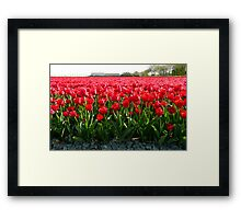 May I offer you a bunch of tulips? Framed Print