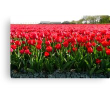 May I offer you a bunch of tulips? Canvas Print