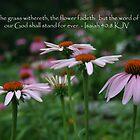The Flower Fadeth by Sue Ellen Thompson