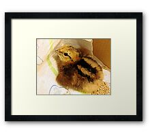 24 hours old Framed Print
