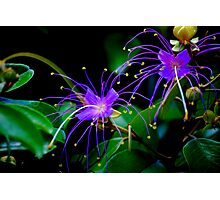 Neon flowers Photographic Print
