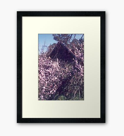 Peach Blossoms in Bloom Framed Print