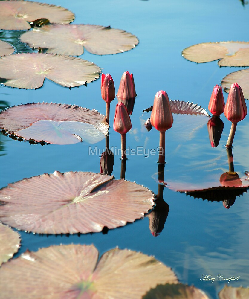 Water Reflecting Lily Pods by Mary Campbell