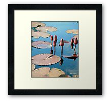 Water Reflecting Lily Pods Framed Print