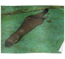 Underwater swimmer Poster